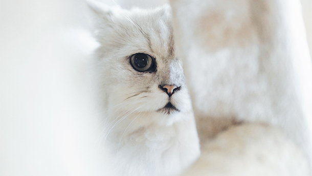white cat peeking behind beam
