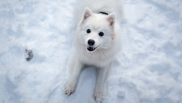 white dog on snow