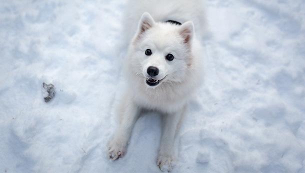 white dog on snow