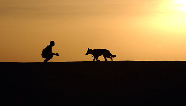sunset shot of owner and dog