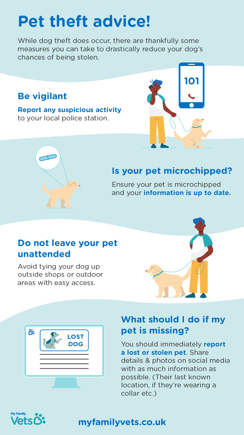 prevent your dog from being stolen infographic